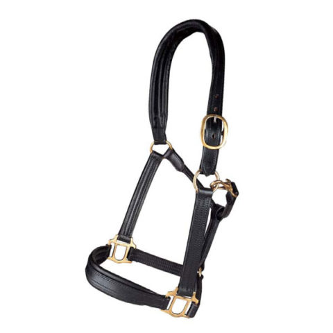 padded-leather-halter